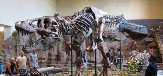 otvet-dinosaur