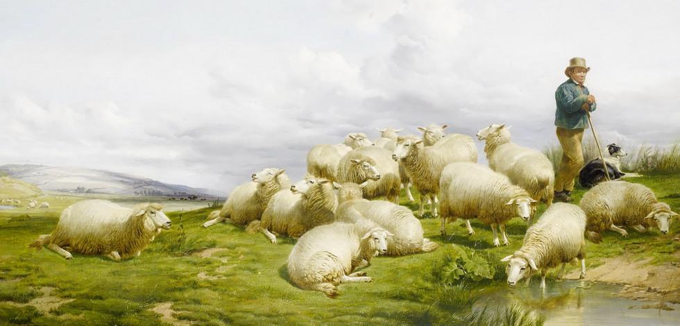 Бойся Бога, а не овец