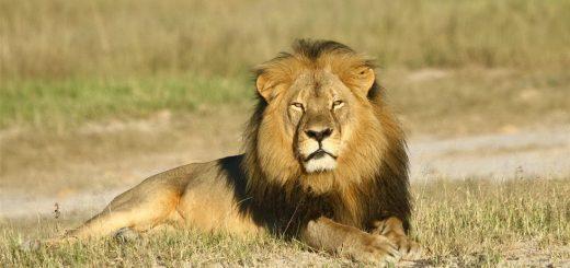 Сострадание, стыд и лев Сесил