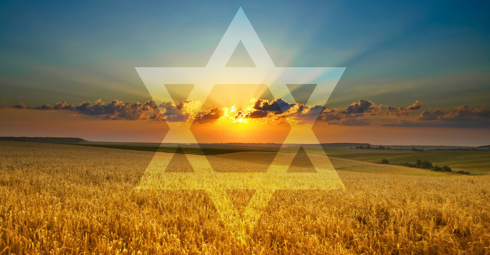 Сид Рот: Урожай в Израиле созрел
