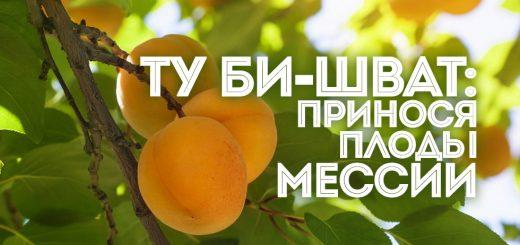 Ту би-Шват: принося плоды Мессии
