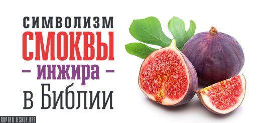 Символизм смоквы - инжира - в Библии
