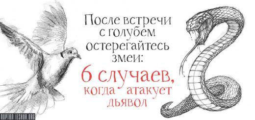 После встречи с голубем остерегайтесь змеи: 6 случаев, когда атакует дьявол