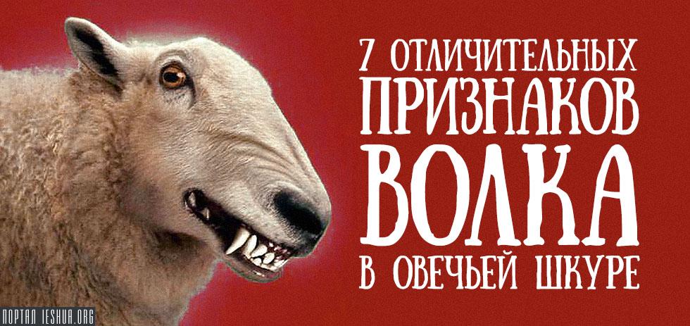 7 отличительных признаков волка в овечьей шкуре