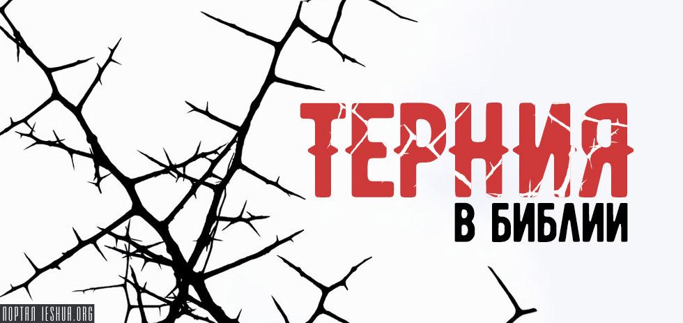 Терния в Библии