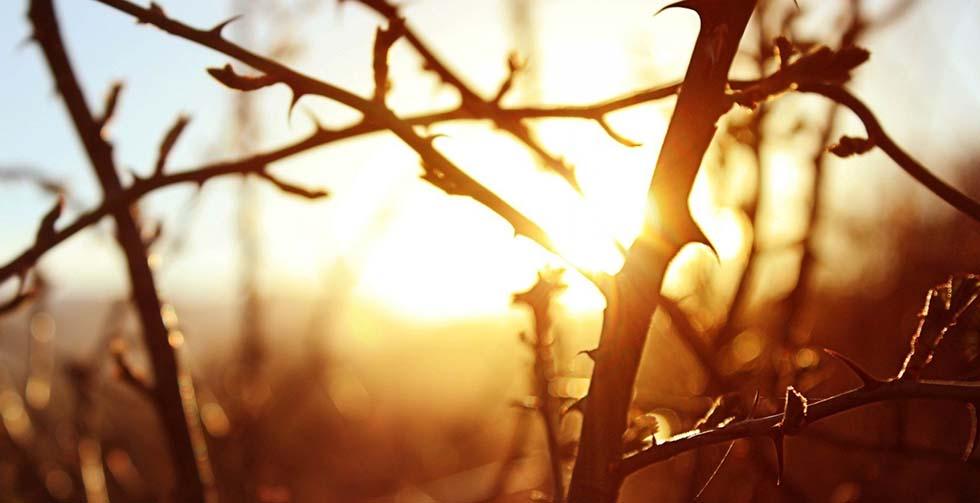 thorns2