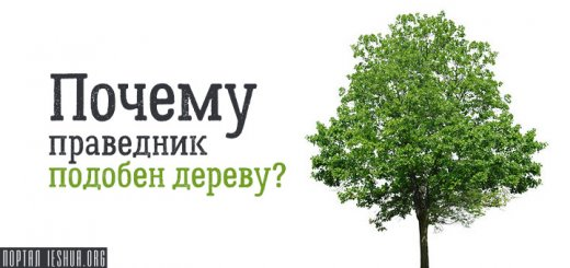 Почему праведник подобен дереву?