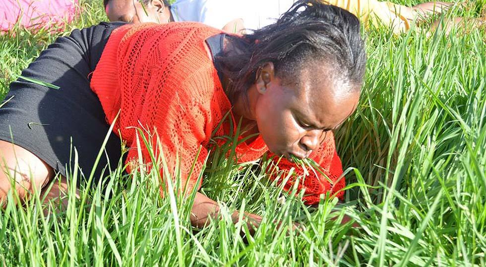 """на фото - члены церкви пастора Даниэля Лесого (ЮАР) едят траву. """"Это приблизит вас к Богу,"""" отмечал пастор Лесого"""