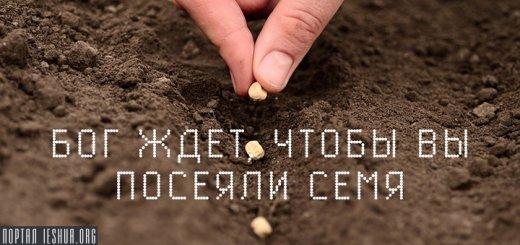 Бог ждет, чтобы вы посеяли семя