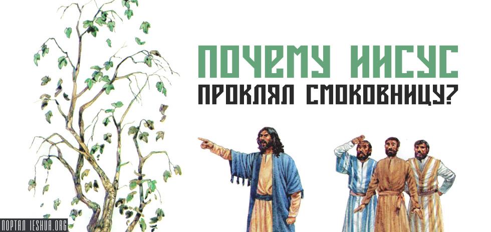 Почему Иисус проклял смоковницу?