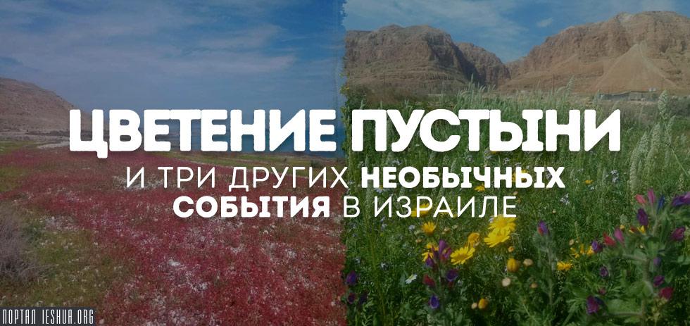 Цветение пустыни и три других необычных события в Израиле