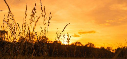 Пусть первый голос будет Его голосом: мудрость утренних встреч с Богом