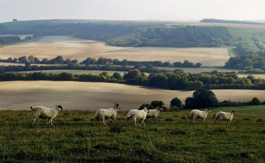 Псалом 22: Добрый Пастырь оживляет нас